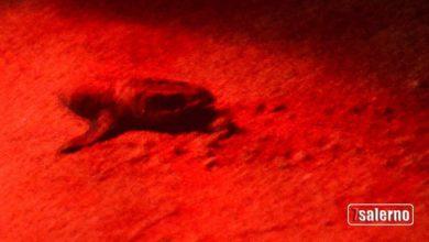 Photo of Caretta Caretta: la nascita delle tartarughine ad Ascea