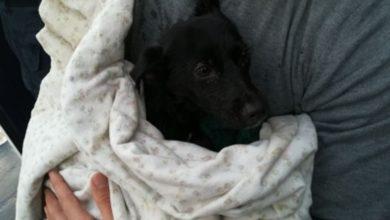 Photo of Maiori: cagnolino abbandonato sulla spiaggia, salvato dalla Guardia Costiera