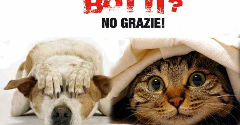 no-botti per animali