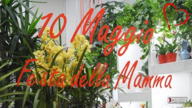 Photo of Festa della Mamma 2020